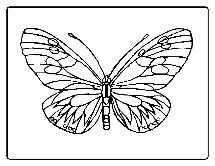 Cute And Beauty Butterfly Coloring Sheet pour Coloriage Papillon