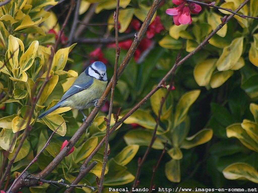 De Magnifiques Oiseaux - Page 3 avec Fond D'?Cran Oiseaux Exotiques