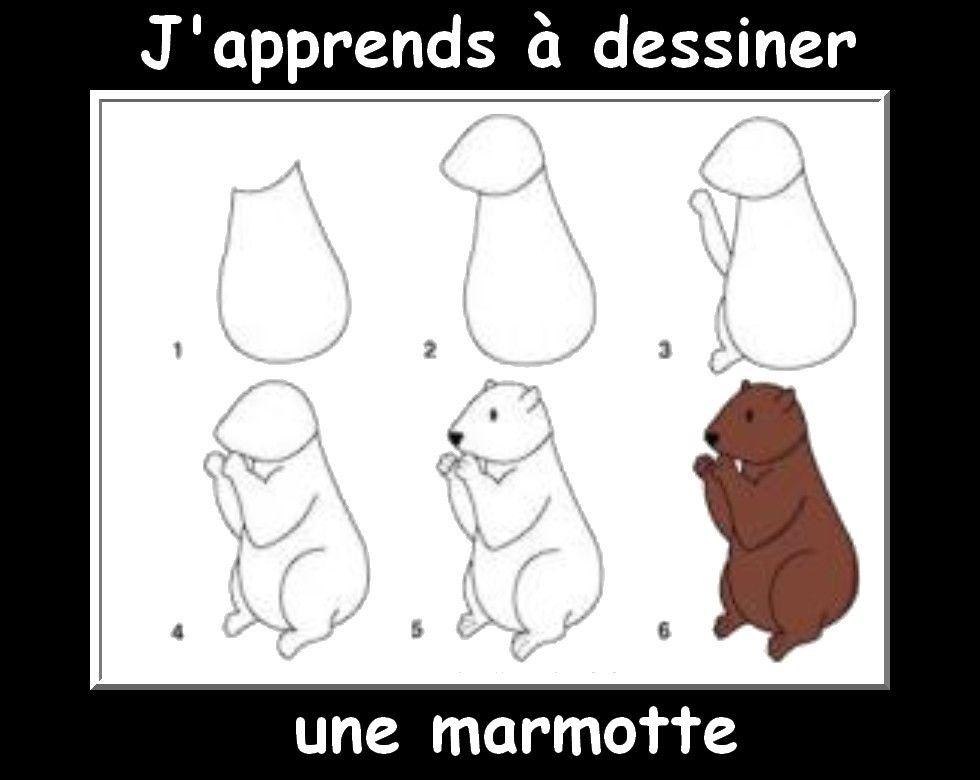 Des Fiches J'Apprends À Dessiner Les Animaux   Marmotte pour Dessin De Marmotte