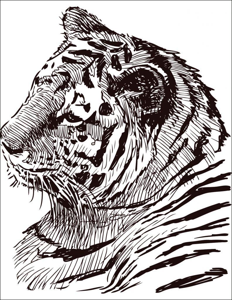 Dessin À Colorier Gratuit Félin Tigre - Artherapie.ca tout Coloriage Zebre A Imprimer Gratuit