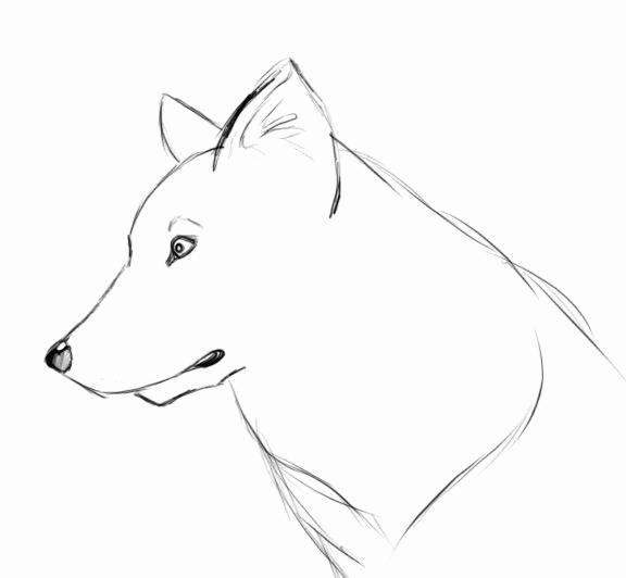 Dessin De Chien Pinterest - Les Dessins Et Coloriage avec Loup Dessin Facile