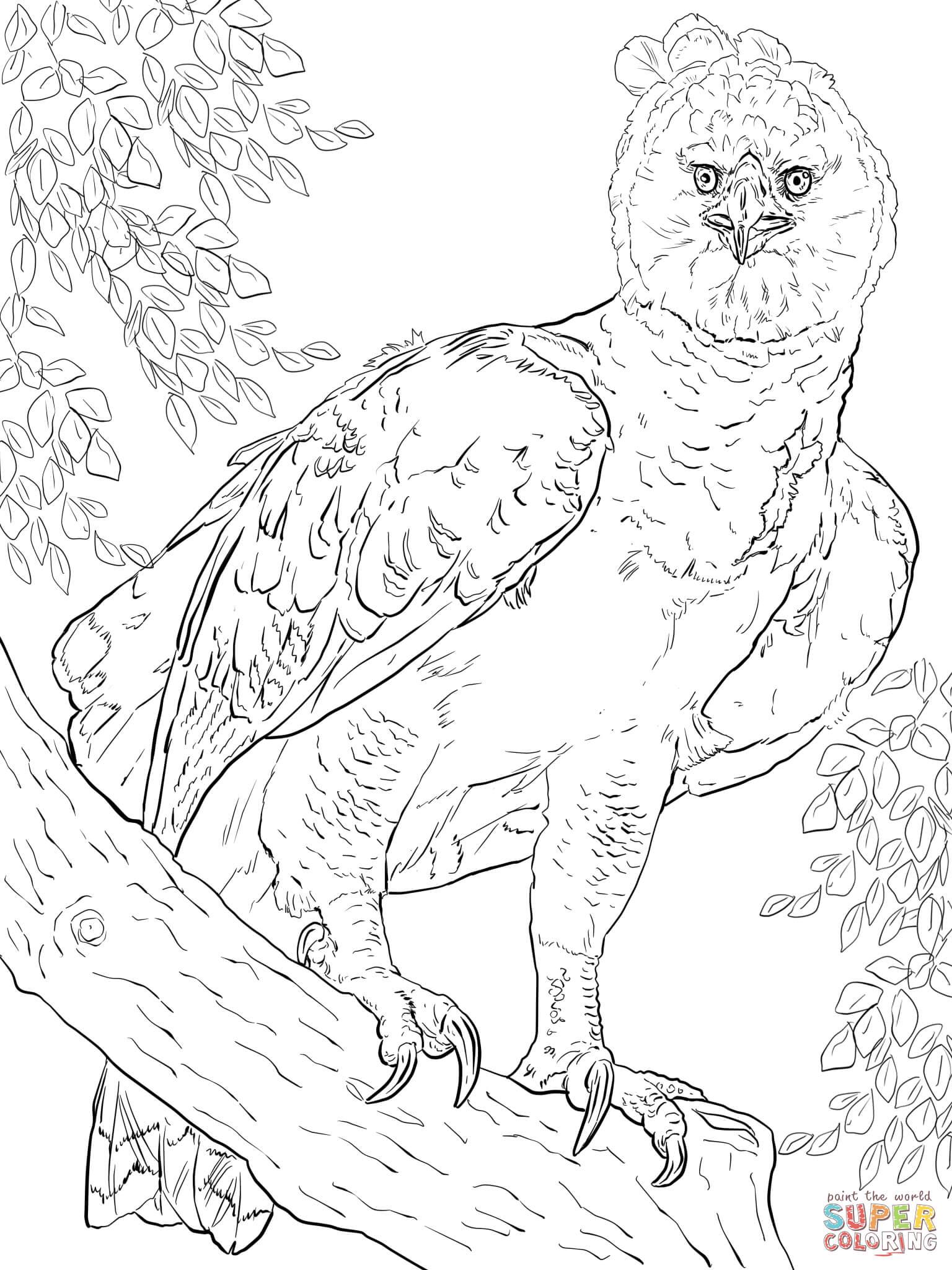 Dessin De Coloriage Aigle À Imprimer - Cp00515 concernant Coloriage Aigle A Imprimer Gratuit