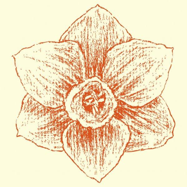 Dessin De Fleur Jonquille Ou Fleur Du Narcisse — Image serapportantà Dessin Jonquille Fleur