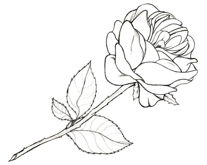 Dessin De Rose En Noir Et Blanc Facile serapportantà Rose Facile A Dessiner