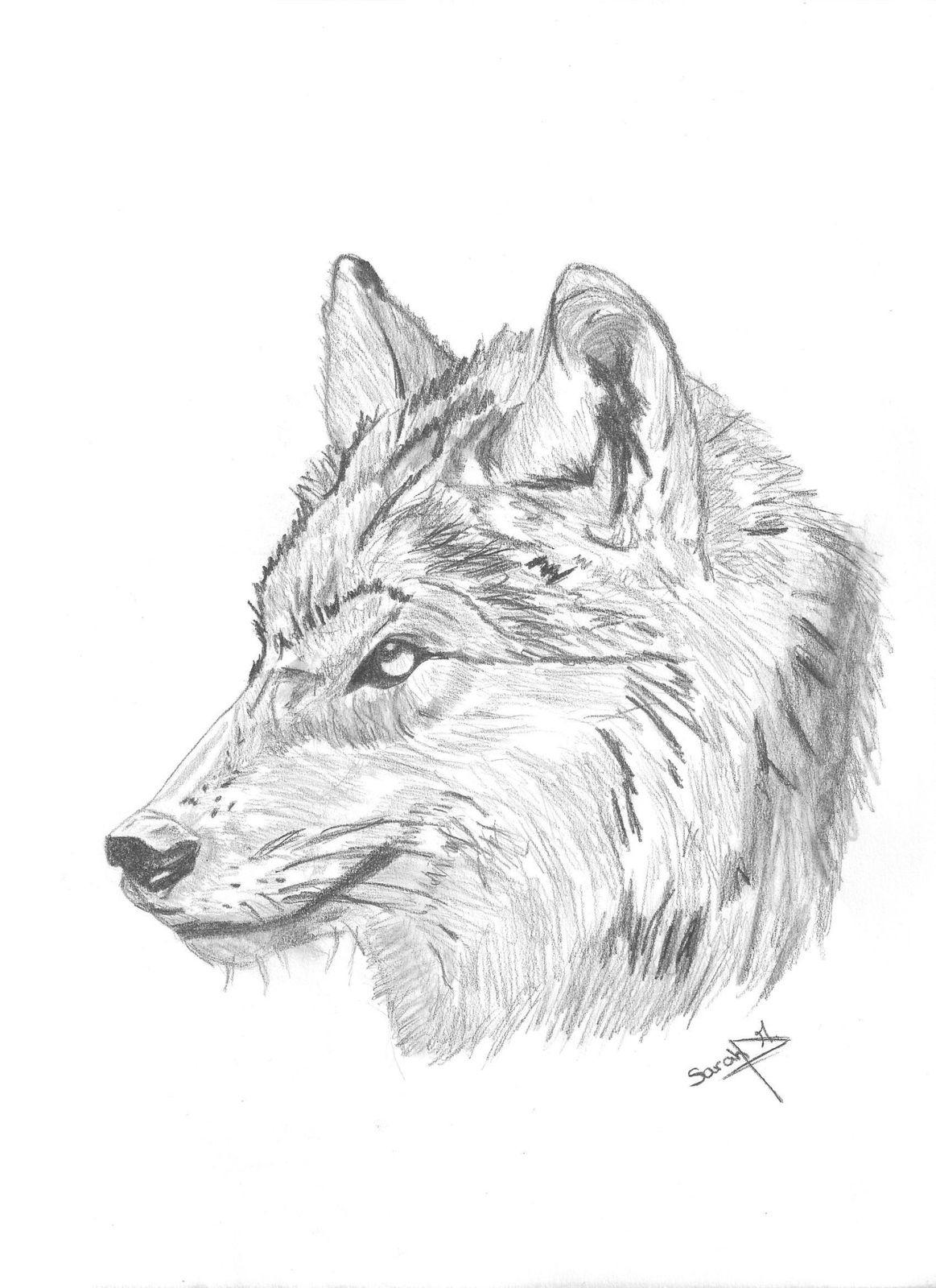 Dessin De Tête De Loup avec Tete De Loup Dessin