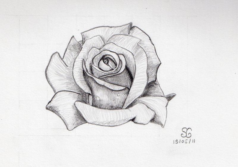 Dessin D'Une Rose - Mes Passions Créatives, Par Sosomonotone encequiconcerne Rose Facile A Dessiner