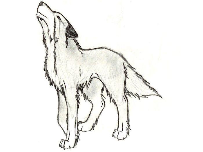 Dessin Loup Facile A Faire pour Loup Dessin Facile