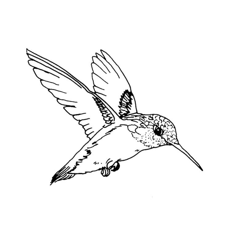 Dessin Oiseau Vole encequiconcerne Coloriage Oiseaux A Imprimer
