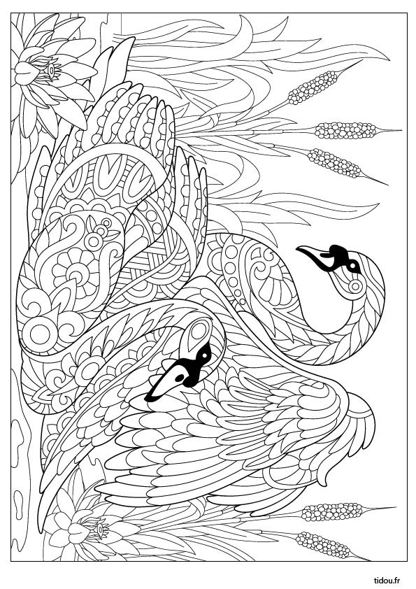 Dessin Pour Adultes Et Enfants, Des Cygnes - Tidou.fr intérieur Cahier De Coloriages Pour Adultes