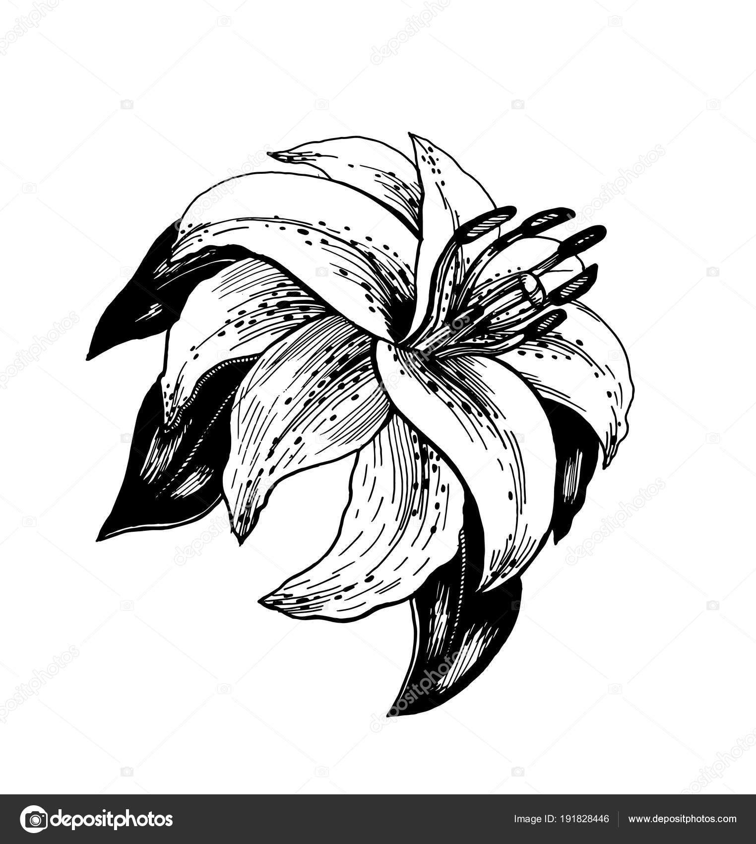 Dessin Réaliste Une Fleur Avec Des Feuilles Style Art Déco tout Dessin D Une Feuille