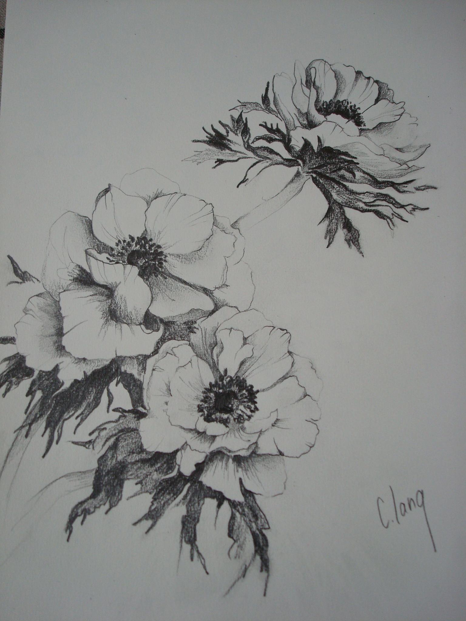 Dessins De Fleurs | Clang Artiste Peintre destiné Dessin De Fleure
