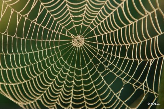 Dessins En Couleurs À Imprimer : Araignée, Numéro : 22565 à Toile D Araignée Dessin
