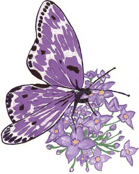Dessins En Couleurs À Imprimer : Papillon, Numéro : 24989 concernant Dessin De Papillon En Couleur