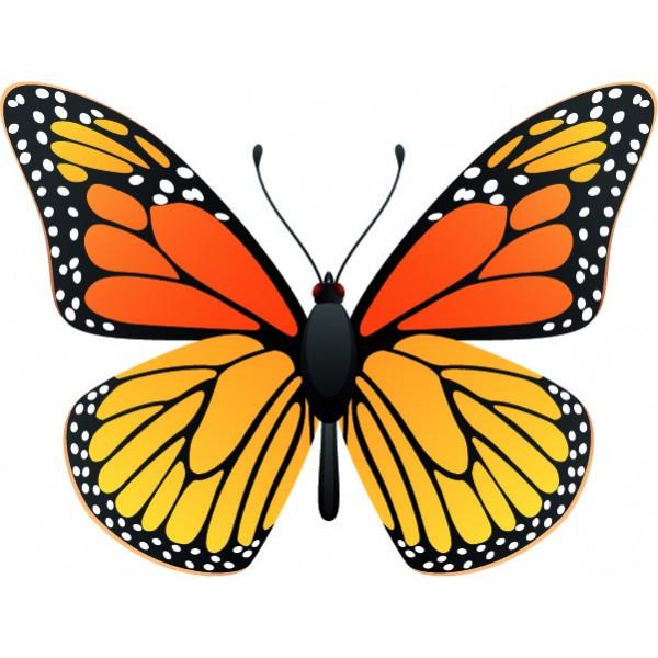 Dessins En Couleurs À Imprimer : Papillon, Numéro : 286748 intérieur Dessin Petit Papillon