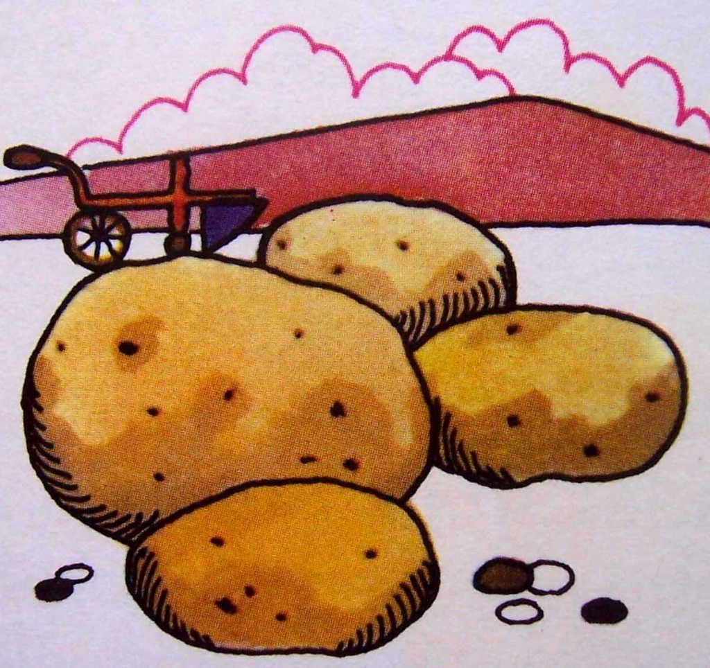 Dessins En Couleurs À Imprimer : Pomme De Terre, Numéro concernant Dessin Pomme De Terre