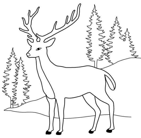 Dessins Gratuits À Colorier - Coloriage Chevreuil À Imprimer destiné Dessin Forêt À Imprimer