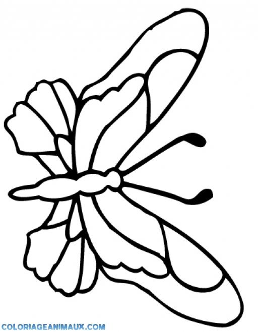 Dessins Gratuits À Colorier - Coloriage Papillon Difficile pour Papillon Dessin Facile