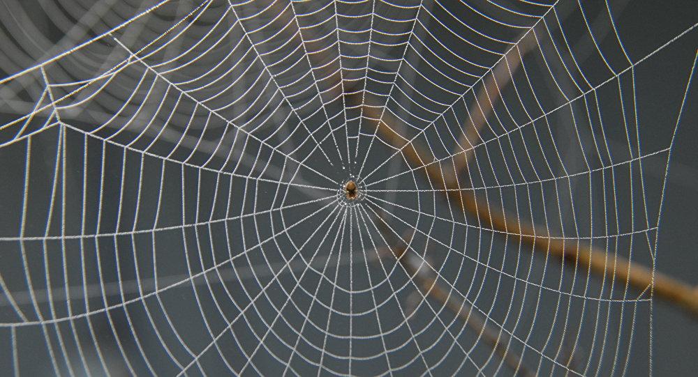 En Australie, Une Gigantesque Toile D'araignée Recouvre intérieur Toile D Araignée Dessin