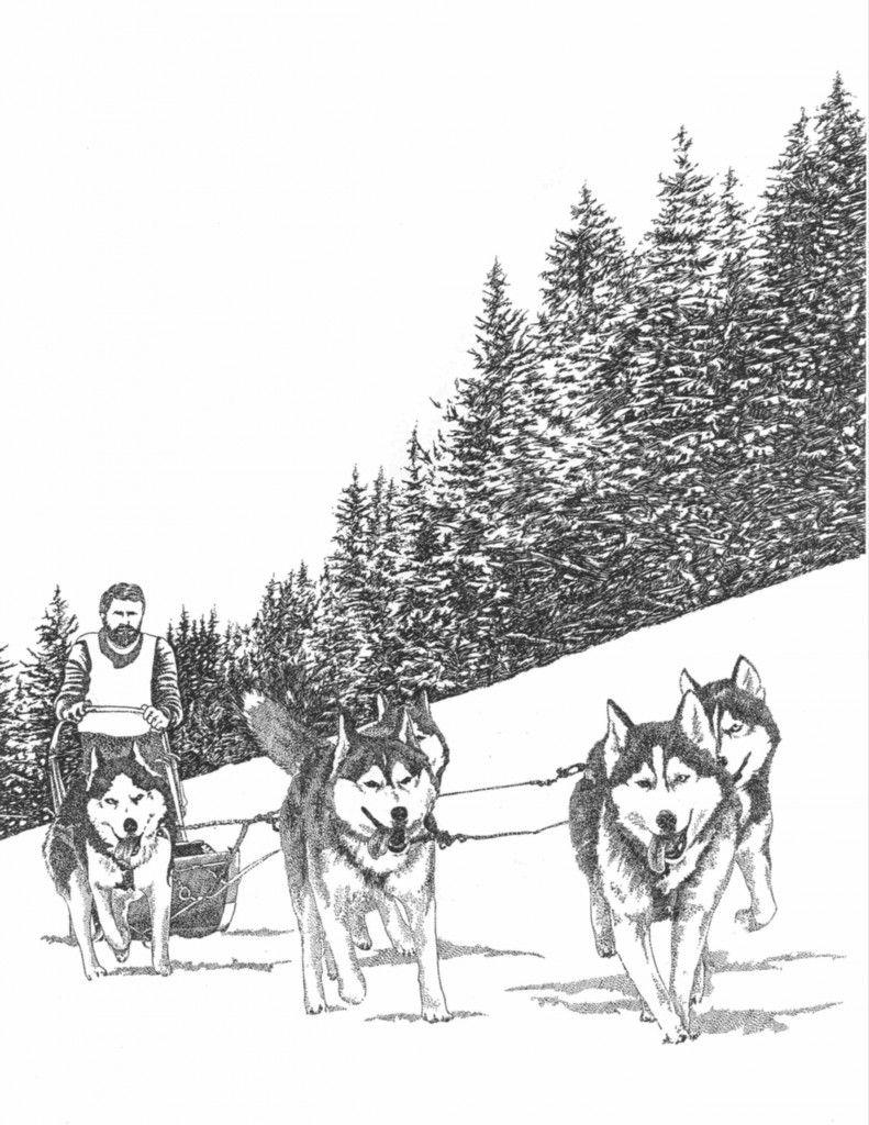 Épinglé Par Jarrod Coomer Sur Iditarod - Winter 2015/2016 à Dessin Chien De Traineau