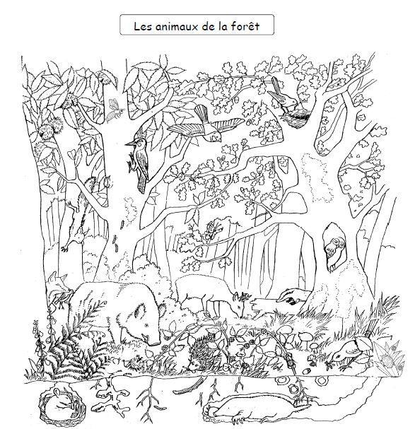 Épinglé Sur Homeschooling pour Dessin De Tout Les Animaux Du Monde