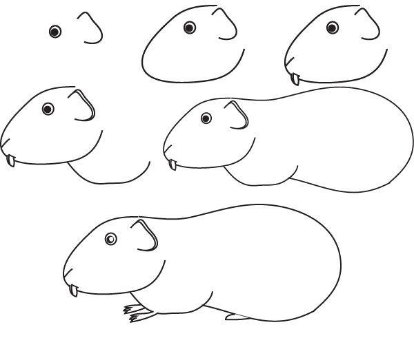 Épinglé Sur How-To-Draw Tutorials avec Dinde Dessin