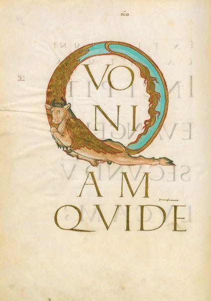 Évangiles De Drogon Initiale Q Formée D'Un Bœuf, Attribut destiné Dessin D Un Boeuf