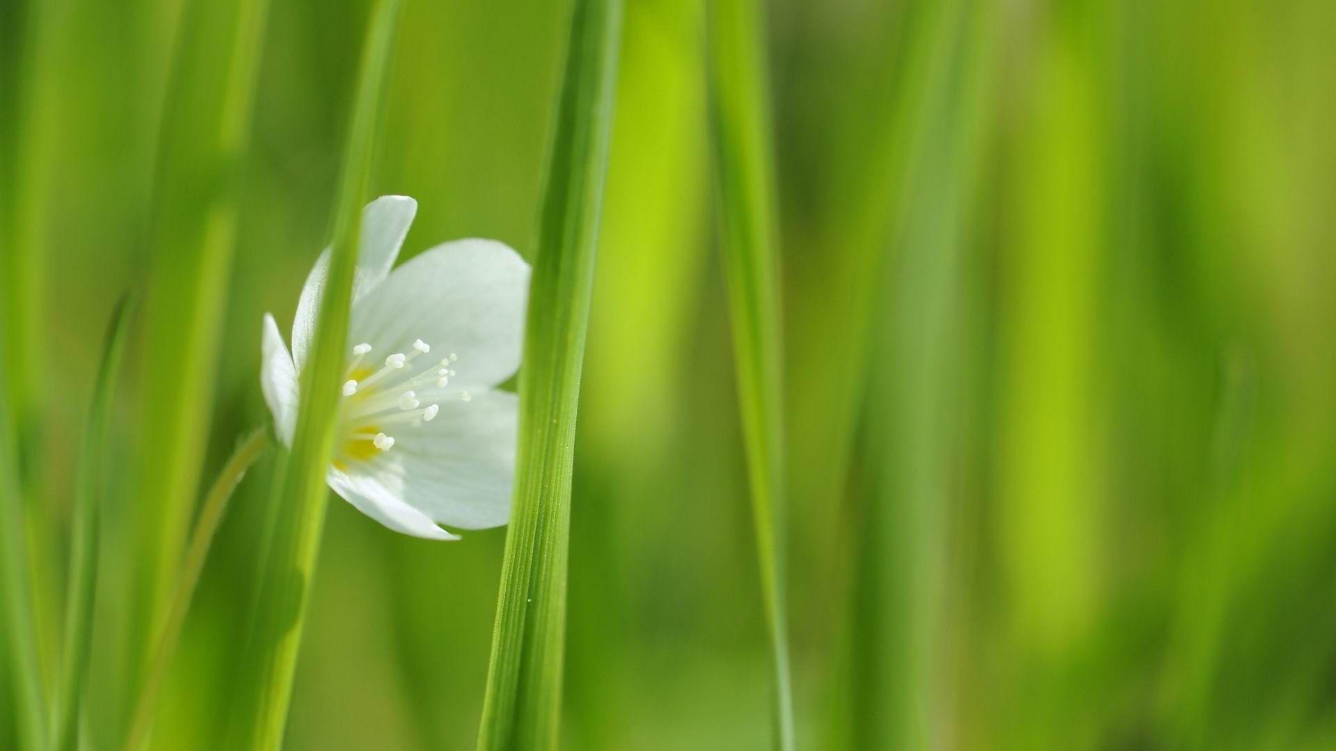 Fleur Blanche-Printemps Fleurs Hd Fond D'Écran - 1920X1080 pour Fond ?Cran Fleurs Et Oiseaux