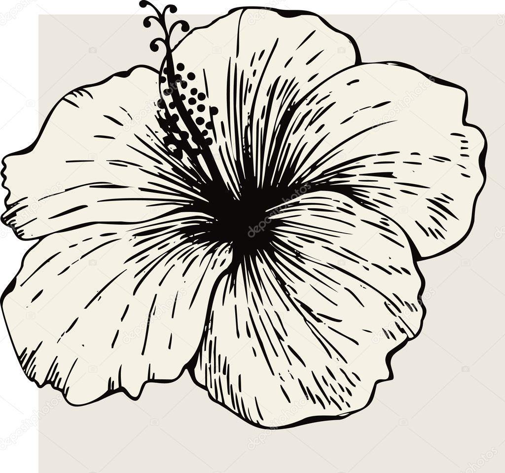 Fleur D'Hibiscus | Dessin Hibiscus, Dessin De Fleur concernant Coloriage Hawaienne