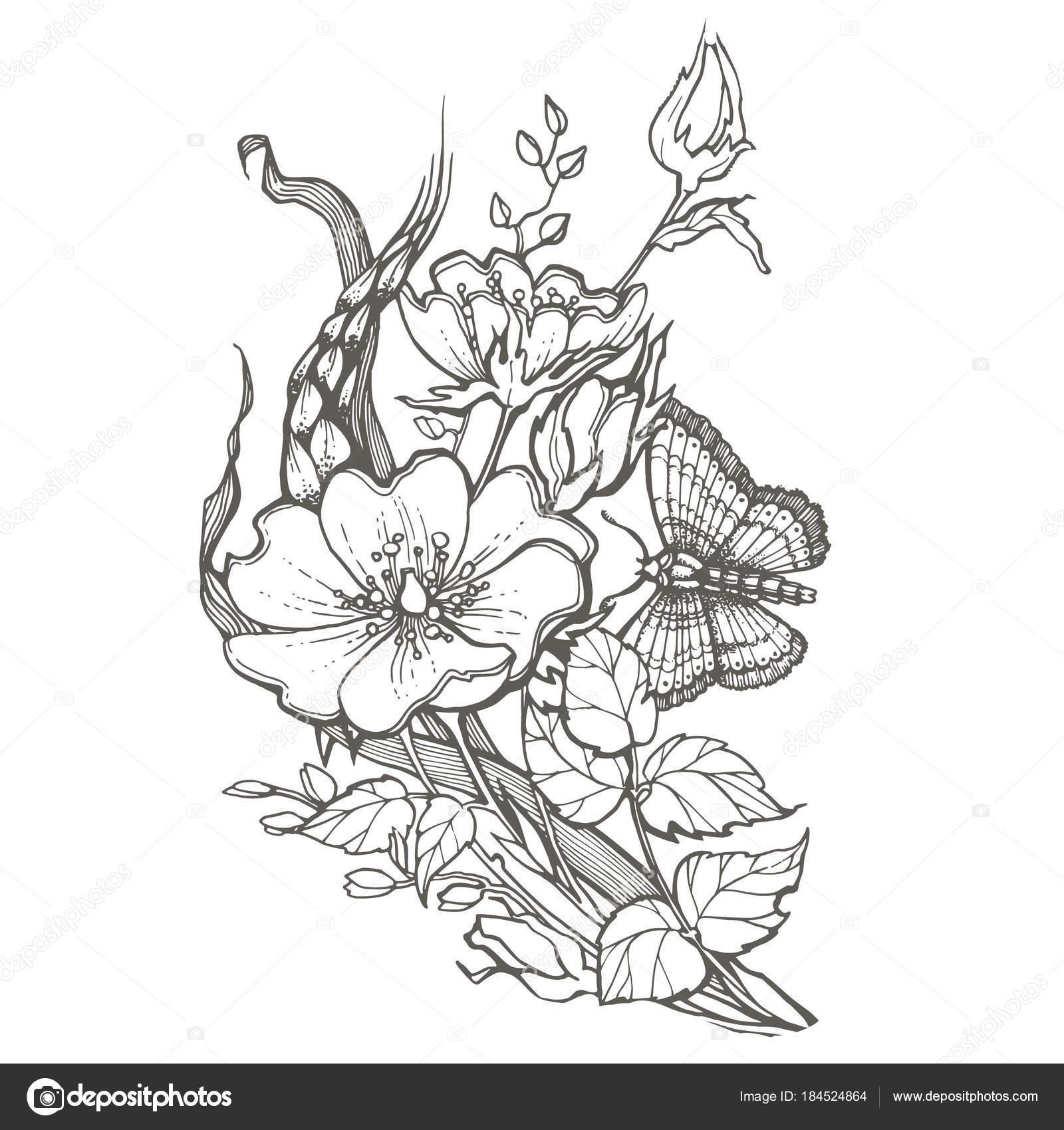 Fleurs D'églantier Sauvage Avec Papillon Dessin Vector destiné Dessin Papillon À Découper
