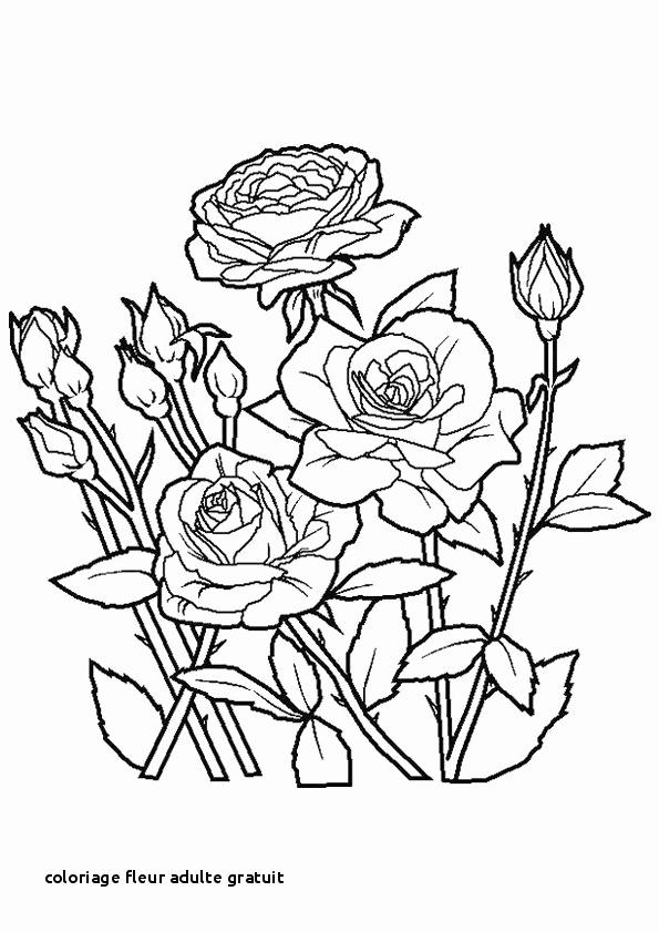 Fleurs Images Gratuites Beau Coloriage Fleur Adulte serapportantà Coloriage D Une Rose