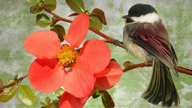 Fond D'Écran Gratuit Printemps Oiseaux - Fonds D'Écran Hd tout Fond ?Cran Oiseaux Exotiques