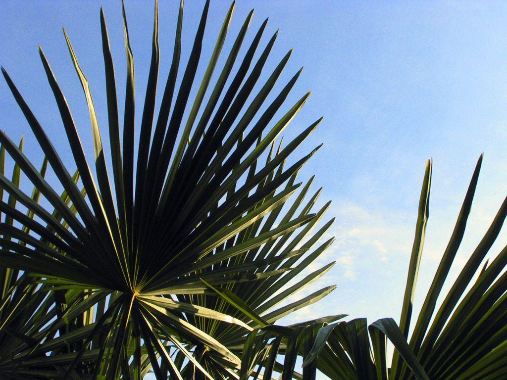 Fond D'Écran Plantes Exotiques Gratuit Fonds Écran Plantes destiné Mot Exotique Font D ?Cran