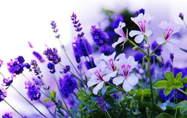 Fond Ecran Les Fleurs concernant Fond ?Cran Fleurs Et Oiseaux