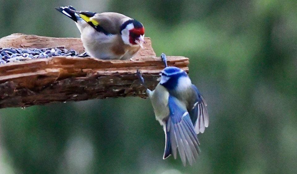 Fond Ecran Oiseaux à Fond ?Cran Oiseaux Exotiques