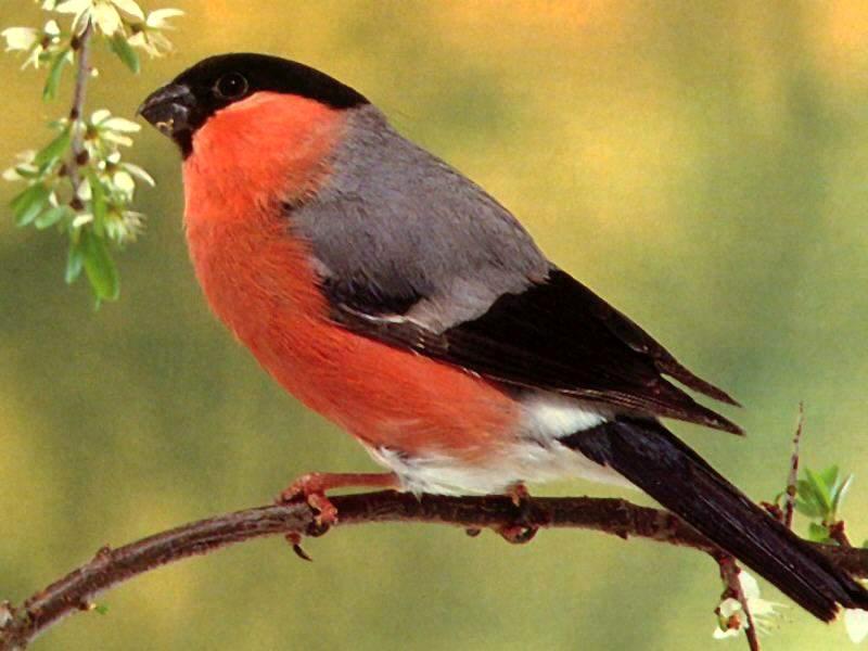 Fond Ecran Oiseaux avec Fond D'?Cran Oiseaux Exotiques