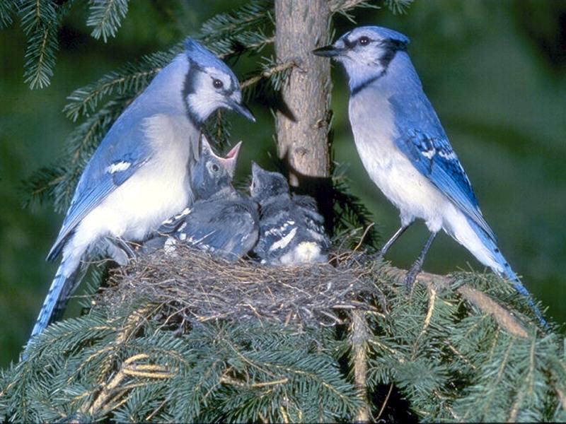 Fond Ecran Oiseaux - Page 2 à Fond ?Cran Oiseaux Exotiques