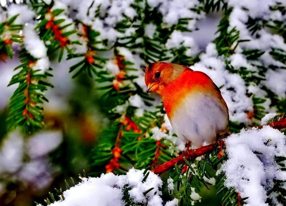 Fond Ecran Oiseaux - Page 3 pour Fond D'?Cran Oiseaux Exotiques