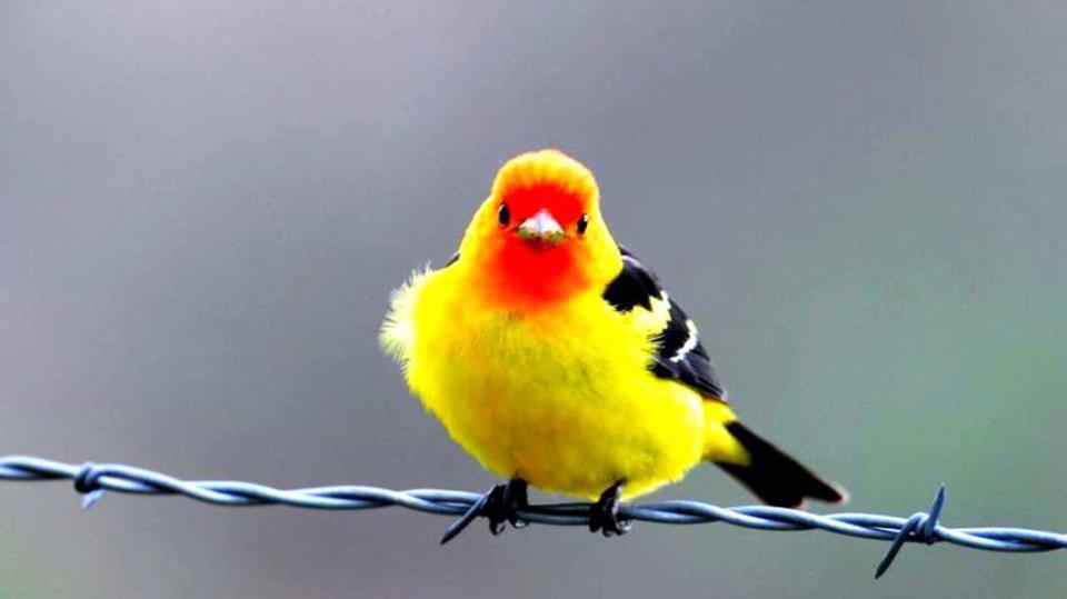 Fond Ecran Oiseaux - Page 4 encequiconcerne Fond D'?Cran Oiseaux Exotiques