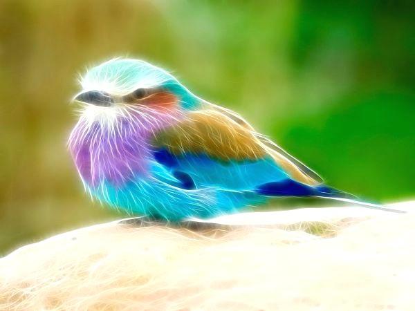 Fonds D Cran Animaux 3D Fondecranmagique Com Avec Bandeau2 concernant Fond D'?Cran Oiseaux Exotiques