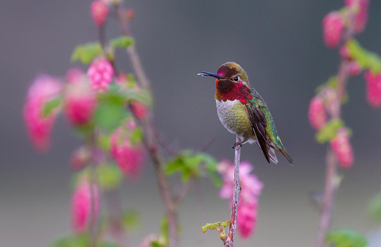 Fonds D'Ecran Colibris Oiseau Animaux Télécharger Photo pour Fond D'?Cran Gratuit Avec Des Oiseaux