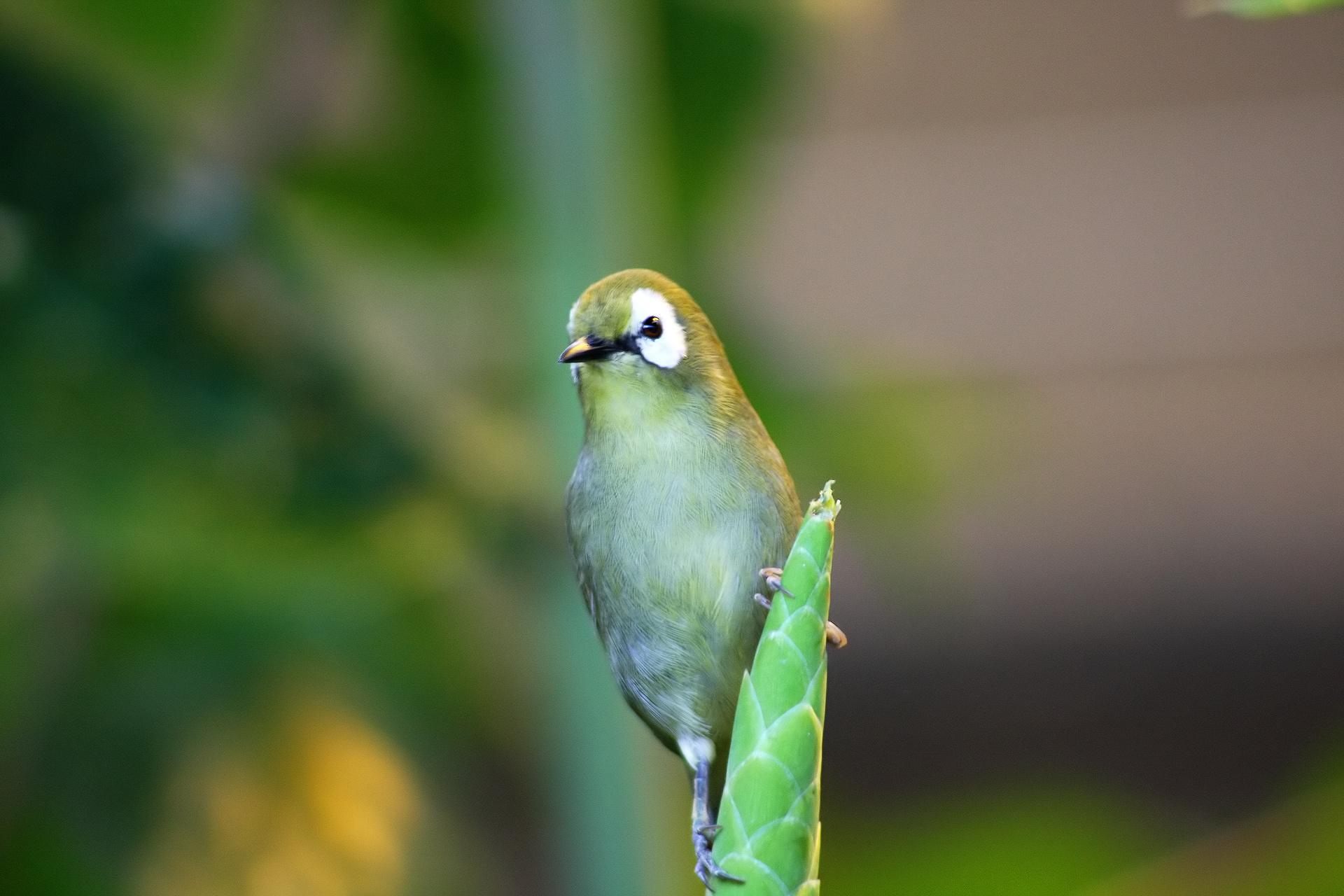 Fonds D'écran Gratuits: Oiseaux Exotiques concernant Fond D'?Cran Gratuit Avec Des Oiseaux