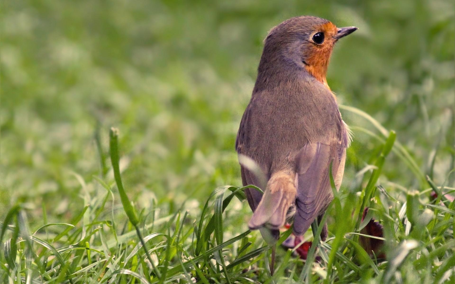 Fonds D'Écran Oiseaux Gratuits encequiconcerne Fond ?Cran Oiseaux Exotiques