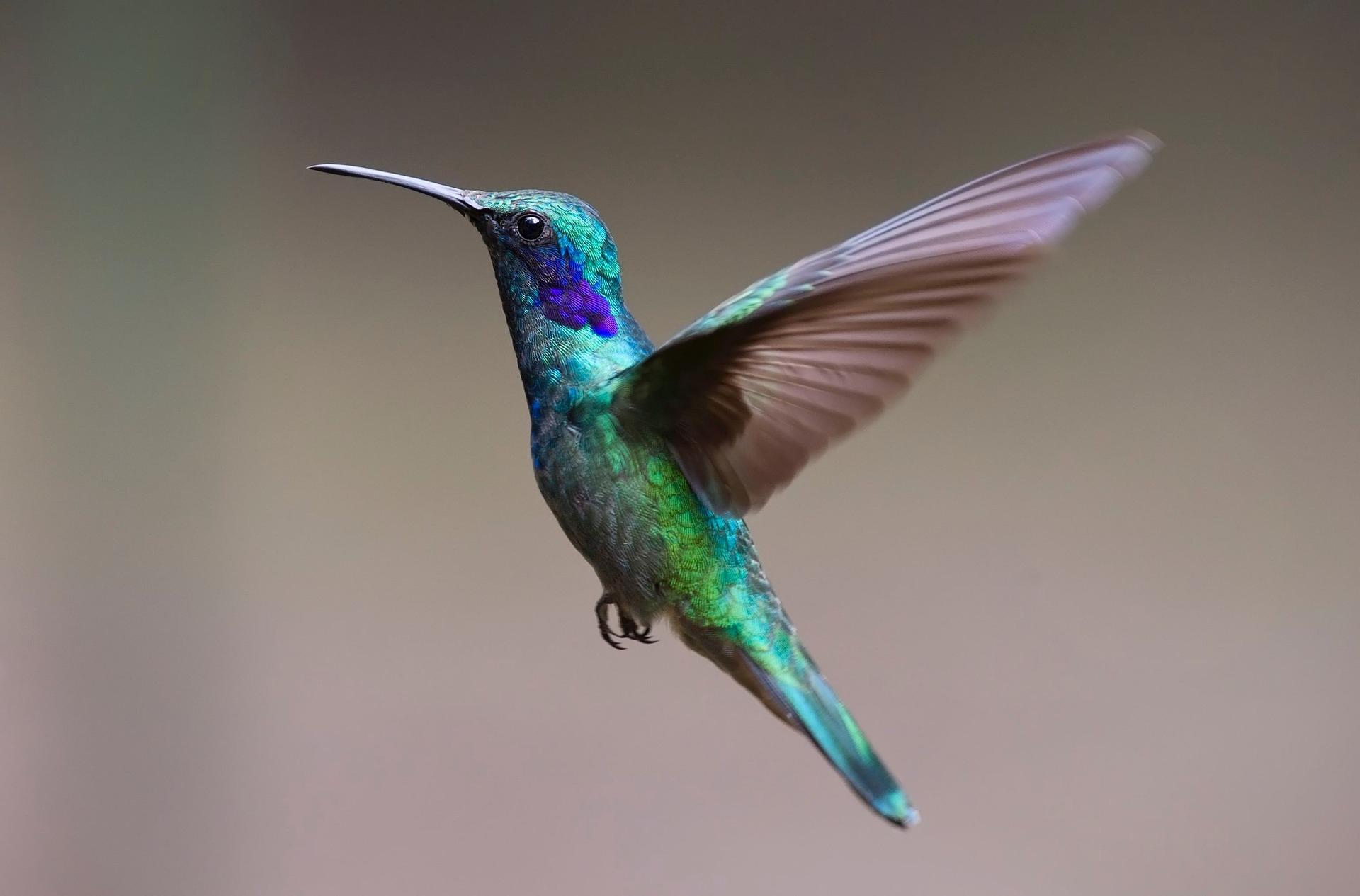 Fonds D'Écran Oiseaux Gratuits pour Fond D'?Cran Oiseaux Exotiques