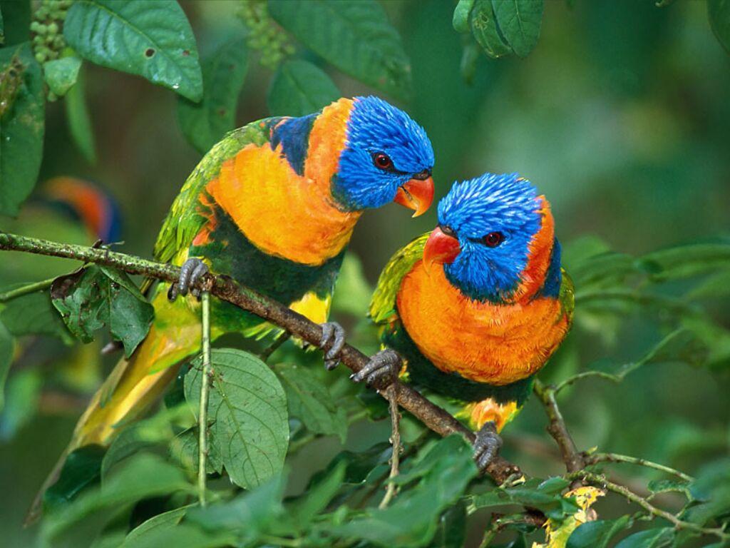 Fonds Ecran Oiseaux - Page 2 serapportantà Fond ?Cran Oiseaux Exotiques