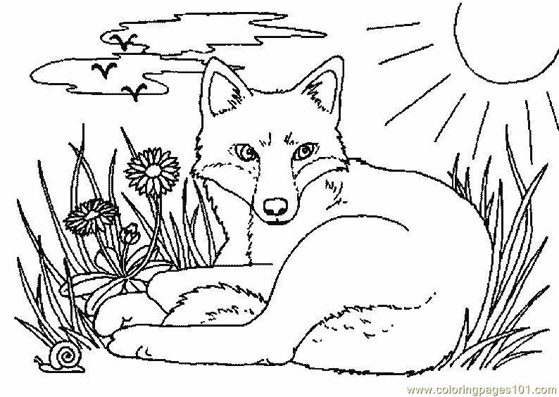 Fox Coloring Page - Free Fox Coloring Pages avec Coloriage Renard A Imprimer Gratuit