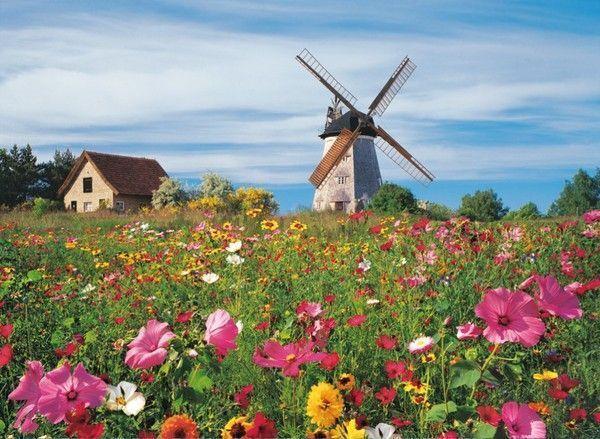 Hollande Paysage Archives - Voyages - Cartes intérieur Fond ?Cran Fleurs Et Oiseaux