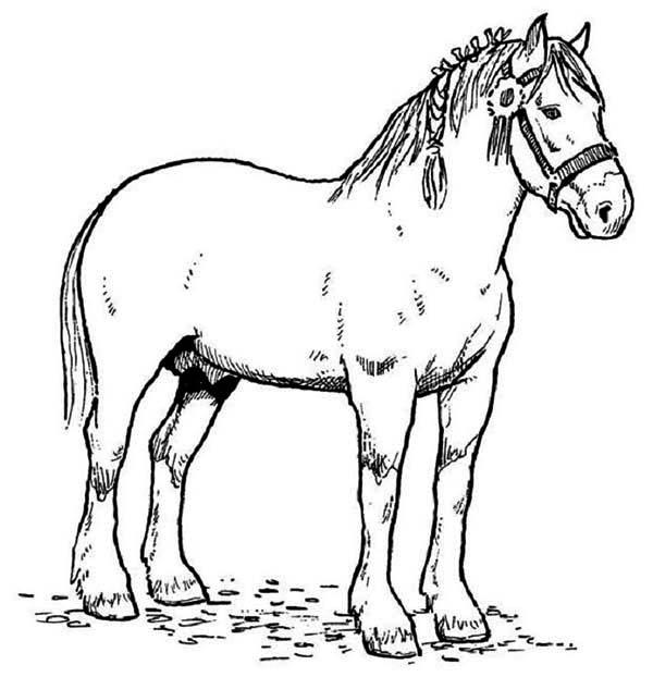Horse Race Champion In Horses Coloring Page - Netart dedans Dessin De Cheval Au Galop Gratuit