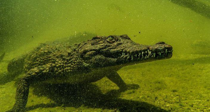 Il Réussit À Survivre Trois Semaines Dans Une Forêt destiné Y Avait Des Gros Crocodiles