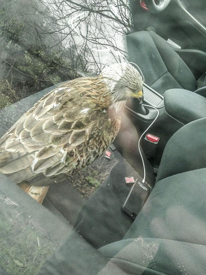 Il Sauve Un Oiseau Blessé Trouvé Sur Le Bord De La Route encequiconcerne Oiseau Blessé Que Faire