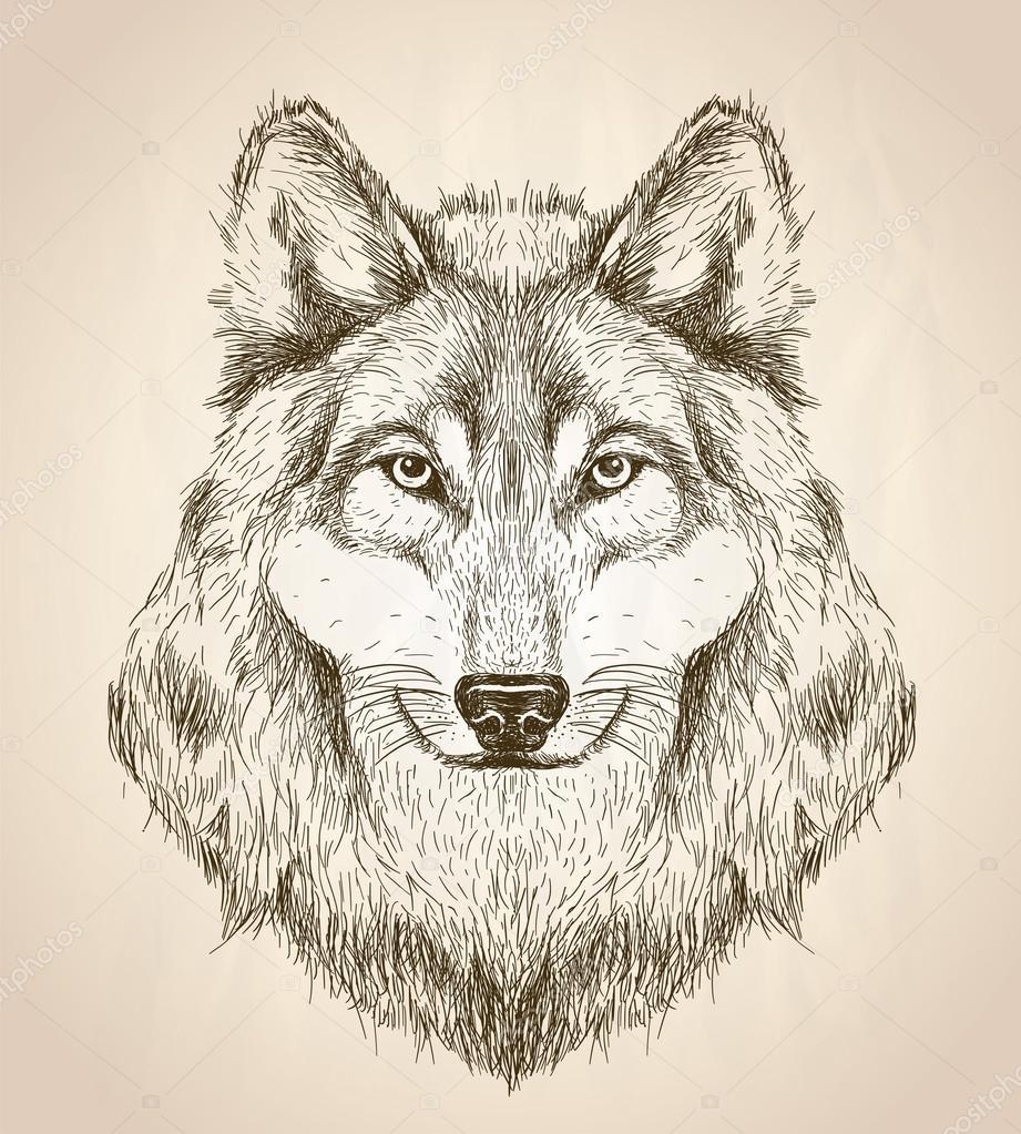 Illustration Dessin Vectoriel D'Une Vue De Face Tête De intérieur Tete De Loup Dessin